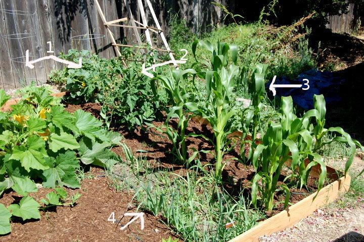 vegetable garden savvyhouseekeeping