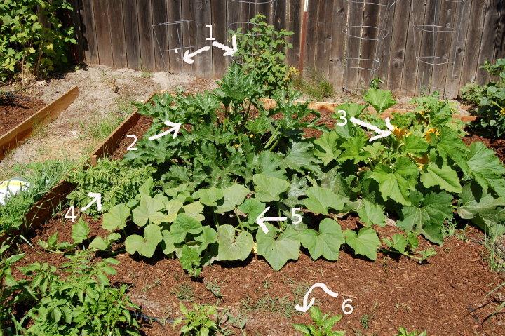 vegetable garden savvyhousekeeping
