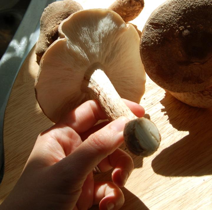 growing mushrooms savvyhousekeeping