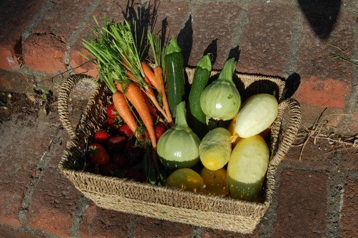 savvy housekeeping vegetable harvest
