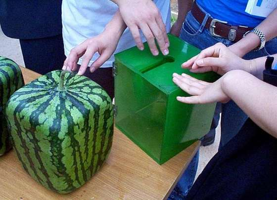 savvyhousekeeping square watermelon