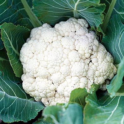 savvyhousekeeping cauliflower