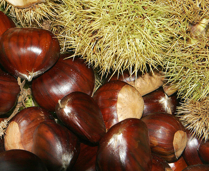savvyhousekeeping how to roast chestnuts oven and fire