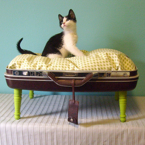 savvyhousekeeping reuse recycle old suitcase to pet cat dog bed