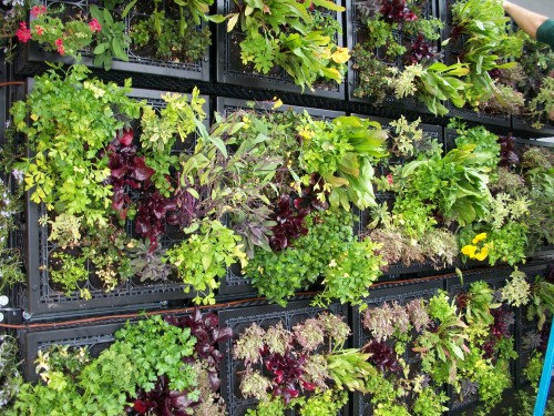 savvyhousekeeping edible living wall