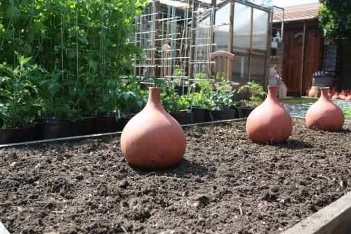 savvyhousekeeping clay pot irrigation saving water in the garden olla drip