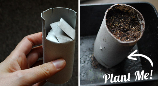 savvyhousekeeping toilet paper roll cardboard seed starter gardening recycling