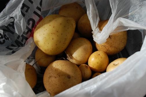 savvyhousekeeping how to plant potatoes