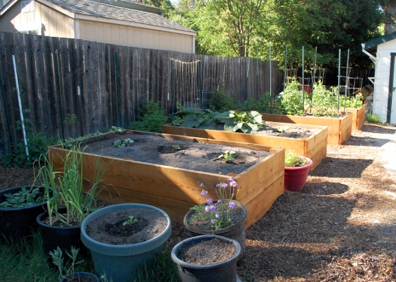 savvyhousekeeping all about raised beds